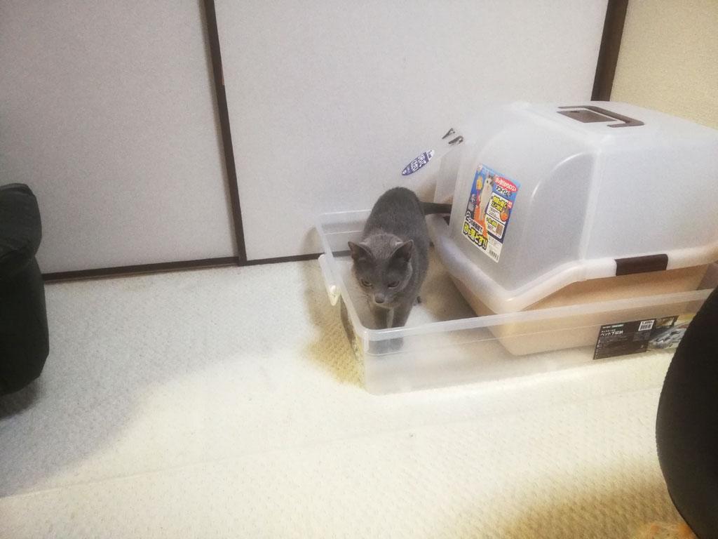 ロシ子がトイレに入ってひやひや。
