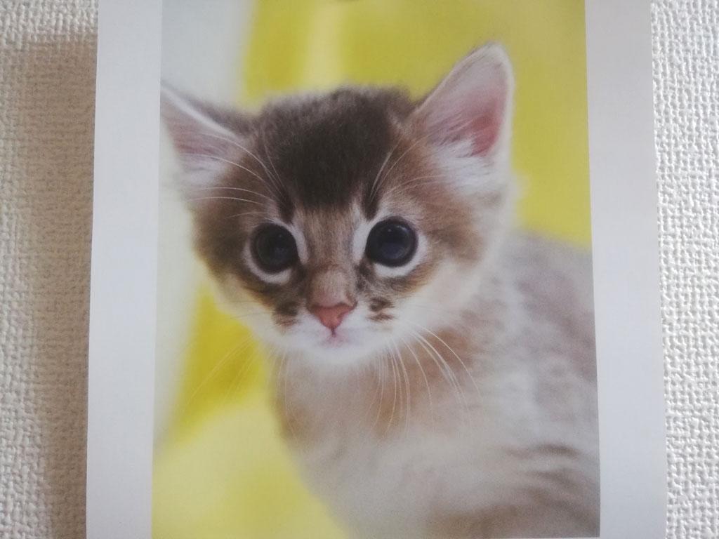 かわいい子猫。