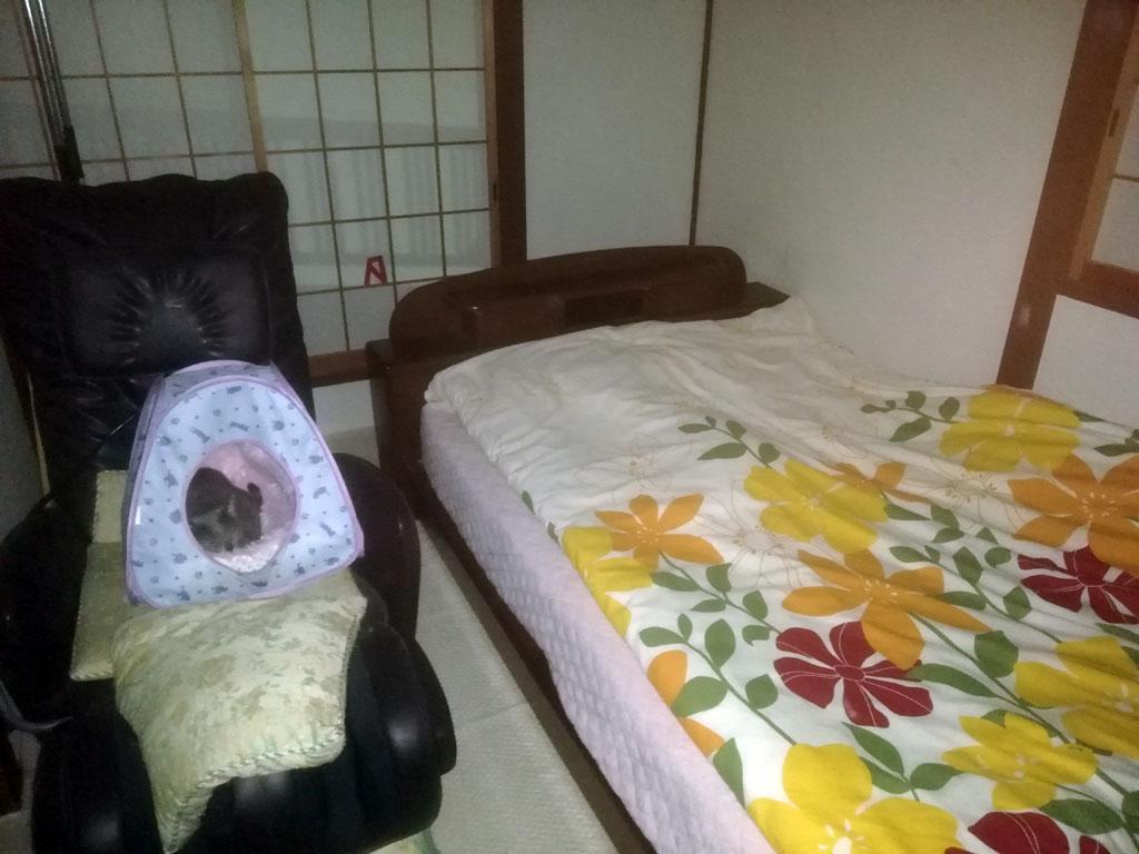 ロシ子はキャットテントの中。