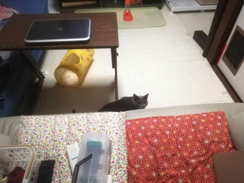 ロシ子はここで1日を過ごした様。