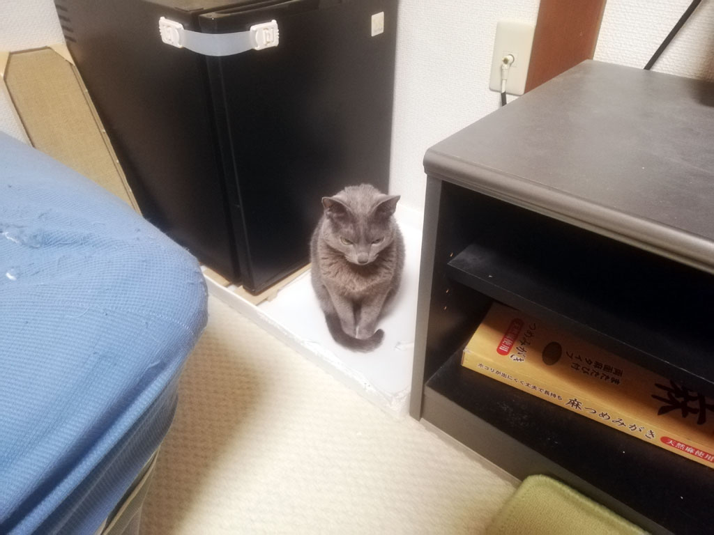 困った猫。