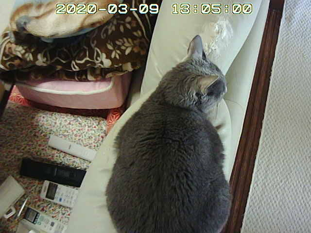 webcamera-20200309_130502