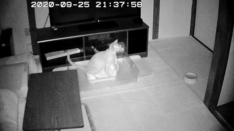 webcamera-202009252137